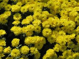 жёлтые, осень