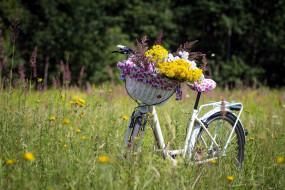 полевые, корзинка, велосипед, лето, луг, цветы