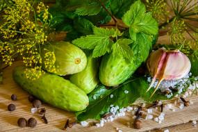 огурцы, чеснок, смородина, лист, укроп, соль