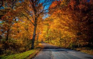 дорога, природа, осень
