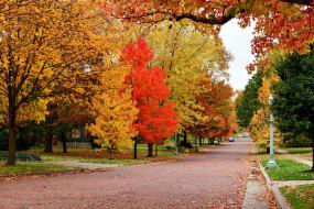деревья, листопад, осень
