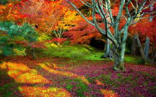 обои для рабочего стола 1920x1200 природа, лес, дерево, осень, листья