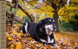календари, животные, собака, 2018, листва, изгородь, дерево