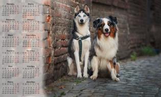 календари, животные, двое, собака, 2018, улица, взгляд