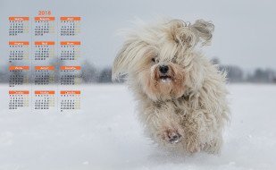 собака, 2018, бег, снег
