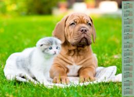 взгляд, кошка, собака, 2018, трава