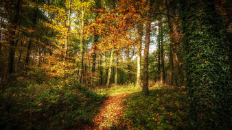 тропинка, Тонгвинлейс, Уэльс, лес, осень, деревья