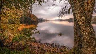 Англия, озеро, Саут-Лейкленд, Кмбрия, дерево, осень