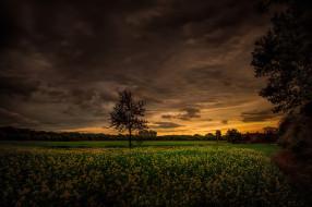 деревья, луг, поле, тучи