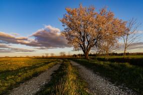 миндальное дерево, дорога, небо, Франция