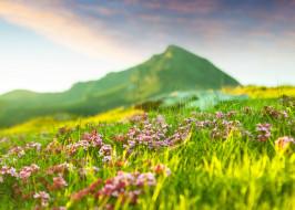 травка, цветы, весна, природа, горы
