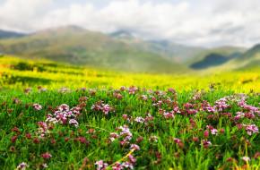 природа, горы, травка, цветы, весна
