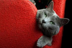 животные, коты, кошка, уют, дом