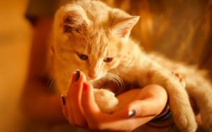 животные, коты, уют, руки, кошка