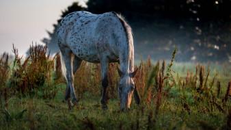 животные, лошади, пасётся, утро, трава, пастбище, конь