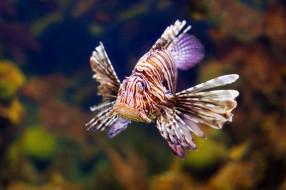животные, рыбы, море, морское, дно, рыба