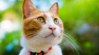 животные, коты, взгляд, морда