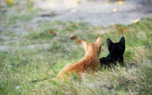 животные, коты, двое