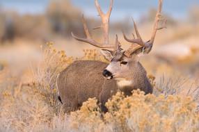 обои для рабочего стола 1920x1276 животные, олени, олень, осень, природа