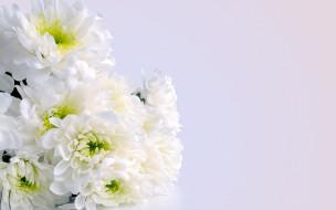 хризантемы, Букет, White flowers, Bouquet, Белые цветы, Chrysanthemum