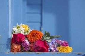 цвет, фон, цветы