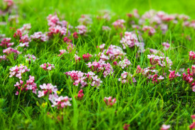 природа, цветы, луг, трава