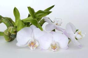 обои для рабочего стола 1920x1280 цветы, орхидеи, бамбук, орхидея, цветок