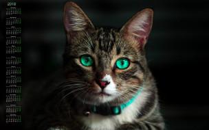 черный фон, 2018, кошка, взгляд
