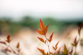 размытие, осень, макро, ветка