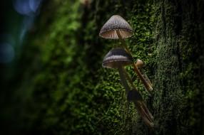макро, мох, кора, дерево, лес
