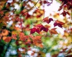 размытие, осень, листва, ветка