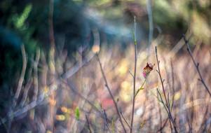 размытие, осень, макро, лист