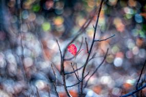 осень, размытие, красный, макро, ветки, листок