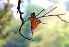 паутина, макро, осень, лист, ветка