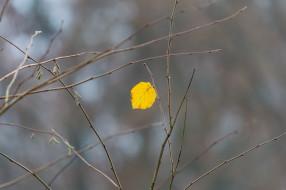 ветки, листочек, жёлтый, макро