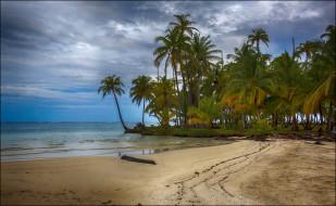природа, пляж, тропики, пальмы