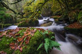 поток, река, деревo, мох, камни