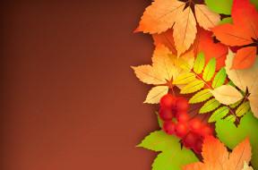 осень, листья, рябина