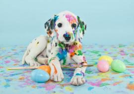 яйца, кисти, краски, щенок
