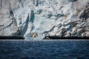 белый, полярный, хищник, лёд, снег, айсберг, море, льдины