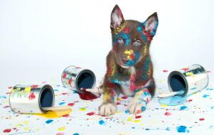 кисти, щенок, краски