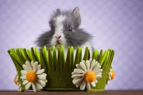 корзинка, цветы, фон, кролик