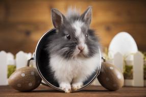 обои для рабочего стола 3616x2410 животные, кролики,  зайцы, праздник, ведерко, кролик, яйца
