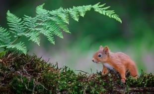 природа, лист папоротника, мох, белка