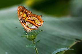 цвета, яркий, нежность, макро, крылышки