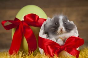 праздник, кролик, яйцо, лента