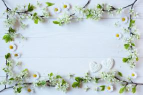 ромашки, фон, ветки, цветы