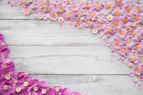 цветы, лепестки, хризантемы, фон