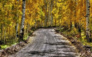 проселочная, осень, березы, дорога