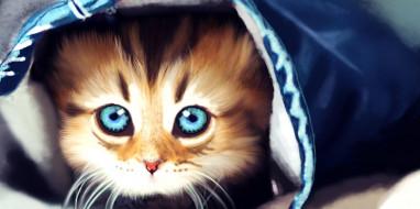взгляд, фон, котенок